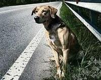 cane su strada