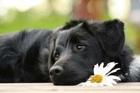 decesso del cane