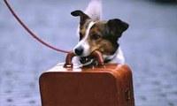 cane valigia